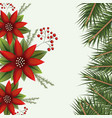 christmas colorful poinsettia flowers and pine vector image vector image