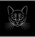 engraving stylized cat portrait on black vector image vector image