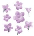 plumeria pudica flower set vector image vector image