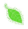 hand drawn green leaf vector image