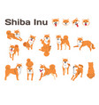 shiba inudog in action vector image