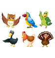 Six different species of birds vector image vector image