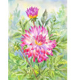 watercolor dahlia in flowering garden summer vector image vector image