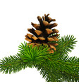 a branch of pine with cone high detailed vector image