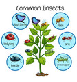 common insect on plant vector image vector image