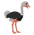 Cute ostrich cartoon