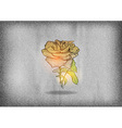flower rose on the grey texture vector image vector image