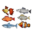 kinds of the fishes vector image vector image