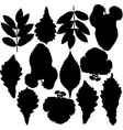 Set of silhouettes of leaves vector image