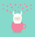 alpaca llama sitting in coffee cup teacup pink vector image