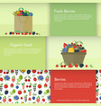 banners with berries in flat style vector image vector image