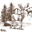 hand drawn deer big antlers wildlife poster vector image vector image
