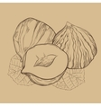 Hazelnut isolated on vintage background vector image vector image