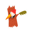 cute woodpecker looking out of the hollow funny vector image vector image