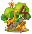 four giraffe in nature vector image