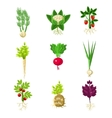 Fresh Vegetables With Roots Primitive Drawings Set vector image vector image