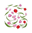 hand drawn set of tulip flower elements bud vector image vector image