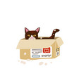 cute cat sitting hiding in post paper box vector image vector image