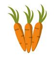 carrot vegetable vegetarian icon vector image