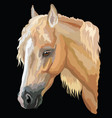 colored horse portrait-8 vector image vector image