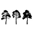 silhouette trees with leaves isilated on white vector image vector image