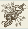 snake and arrow vintage logo design vector image