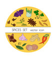 spices set of colored icons vector image