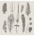Feathers collection Vintage design set Hand vector image