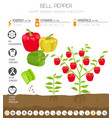 bell pepper beneficial features graphic template vector image vector image