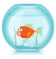 gold fish in aquarium vector image vector image