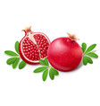 ripe juicy pomegranate fruit vector image vector image