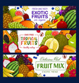 tropical fruits and berry banners vector image vector image