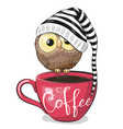 cartoon owl is sitting on a cup coffee vector image vector image