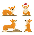 corgi dog set of four pictures vector image vector image