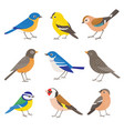 set summer garden birds vector image