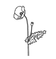 Sketch floral poppy card isolated on white vector image vector image