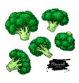 broccoli hand drawn set vegetable drawing vector image