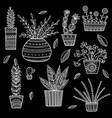 house plants set vector image vector image