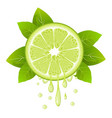lime slice with juice drops juicy citrus fruit vector image