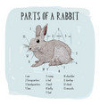 part of rabbit of engraving rabbit vector image vector image