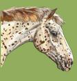 colorful horse portrait-2 vector image vector image