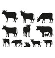 cow silhouette black cows and calf mammal animals vector image vector image