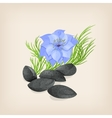 Nigella or black cumin with flowers and leaves vector image vector image