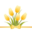 Yellow tulip spring flowers vector image