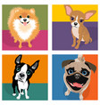 cartoon pomeranian chihuahua boston terrier pug vector image