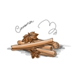 Cinnamon sketch for your design vector image vector image
