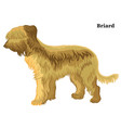colored decorative standing portrait of briard vector image vector image