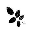 rowan tree leave silhouette plant and nature vector image vector image