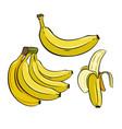 set of yellow bananas vector image