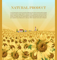 sunflowers field background summer vector image vector image